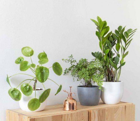Imagén de la tienda online de plantas be.green.com